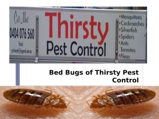 Bed Bugs of Thirsty Pest Control.pptx