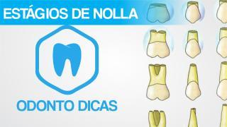 ROTEIRO NOLLA.pdf