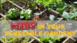 Weeds in Your Vegetable Garden.pdf