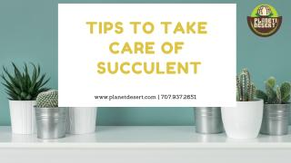 Tips to Take Care of Succulent.pdf